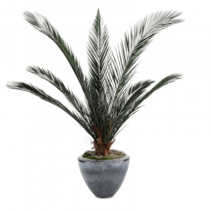 tropical palms product image